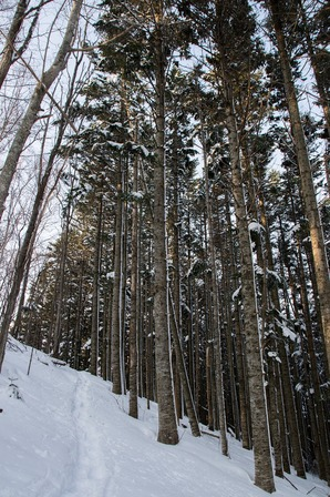 幌岩山登山遊歩道|各課からのお知らせ|佐呂間町